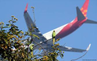Parakeets and Plane