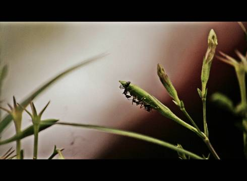 Ant23