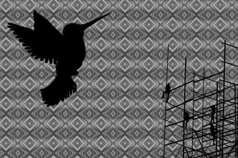 birdbilder2lq