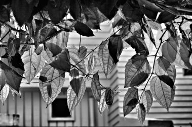 Leaf Study 6
