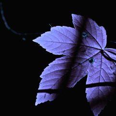 leafblue