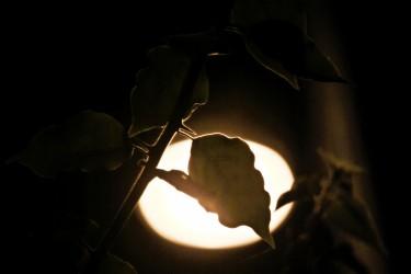Leaf and Thorn