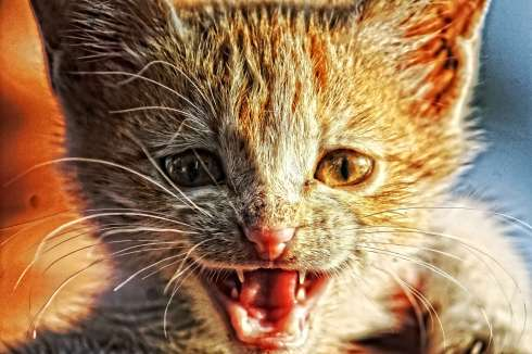 catduality