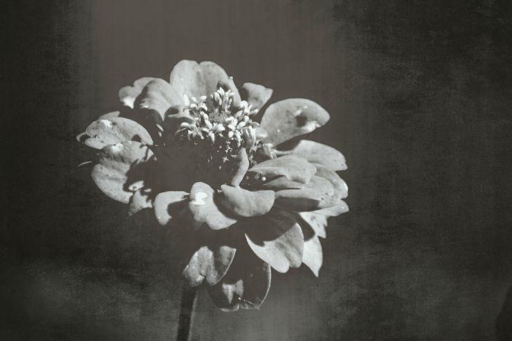 flowerdark