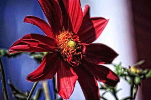 flowerpainted