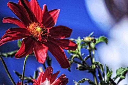 flowerpainted2