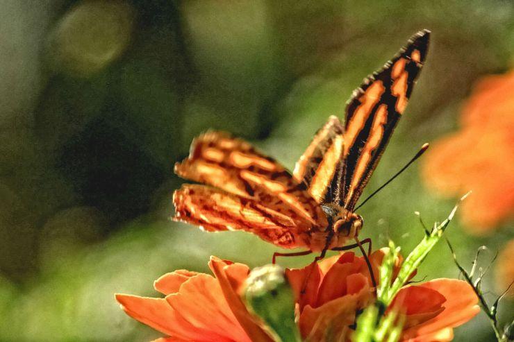 screamofabutterfly