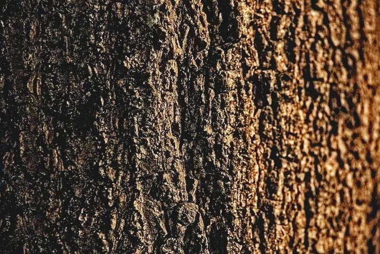 when-the-tree-spoke