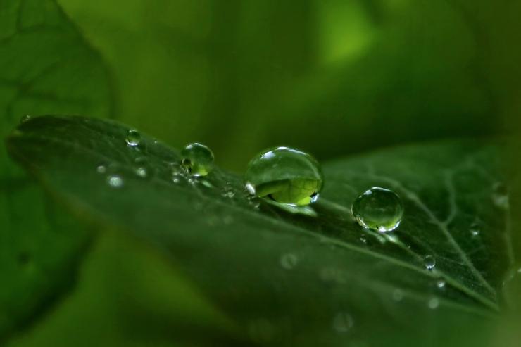 droplet3-4