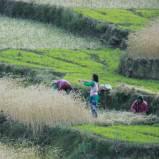 farmwomenlq