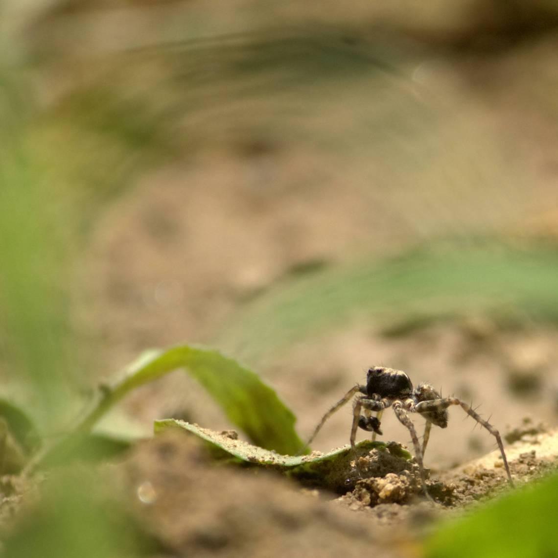 spiderlq