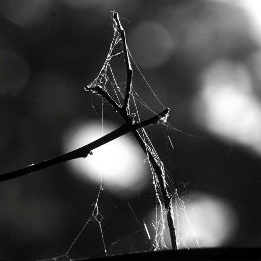 spiderweb1lq