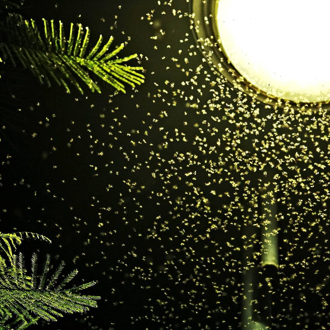 Night Lifesqlq