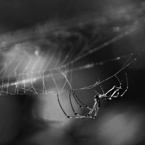 spider8bwlq2
