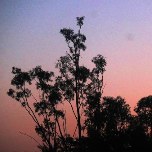 evening5alq