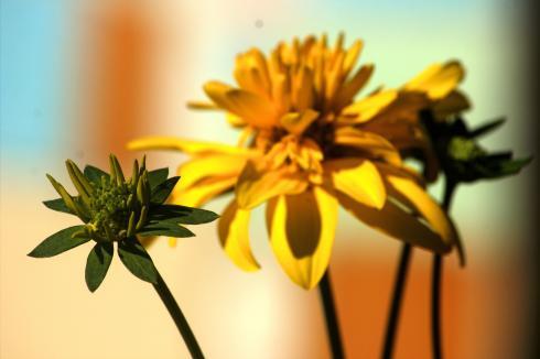 flowerlq
