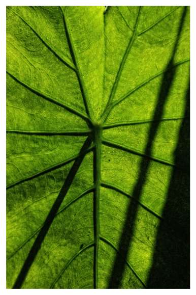 leaflonglq