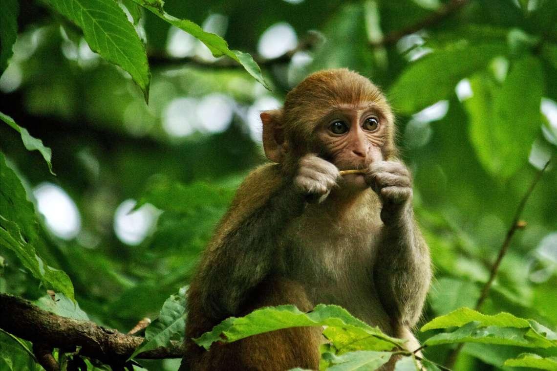 monkey1lq