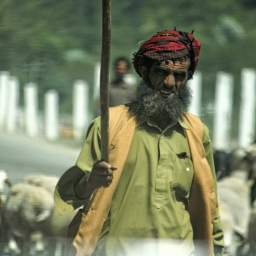 A Shepard in the Kashmir-Kargil highway