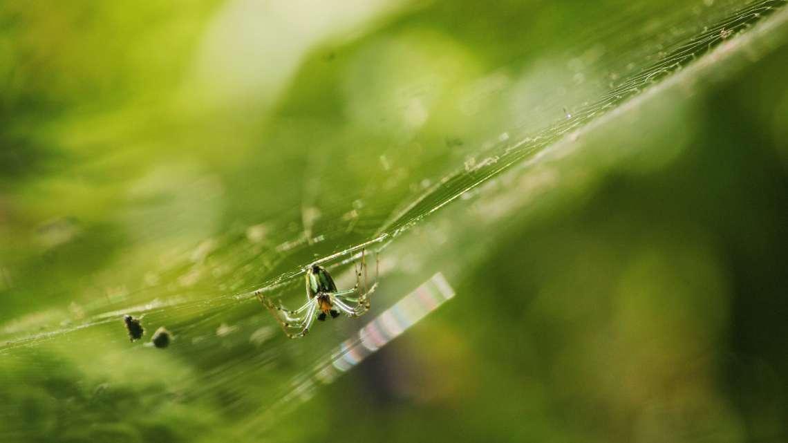 spider1alq