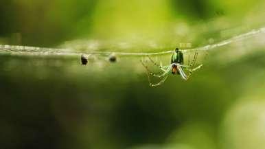spider2lq