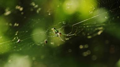 spider3lq