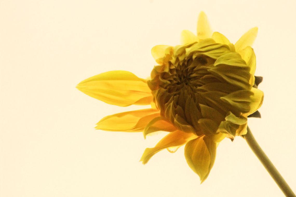 floweredit1lq